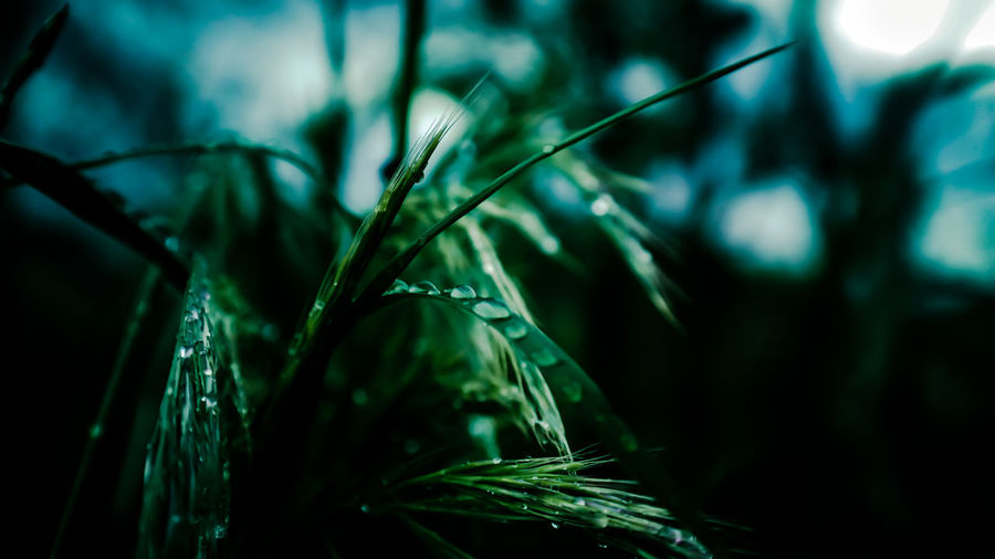 Beauty In Nature Blade Of Grass Botany Close-up Day Detail Dew Focus On Foreground Fragility Grass Green Green Color Growing Growth Leaf Nature No People Outdoors Plant Selective Focus Stem Tranquility Twig Up Close Street Photography Weather