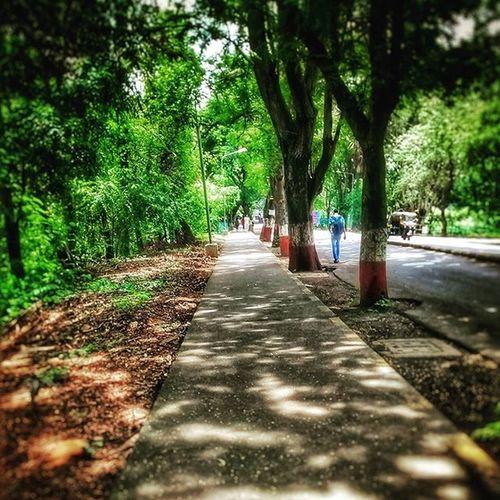 Iitcampus Greenaroundme Trees Footpath motoe
