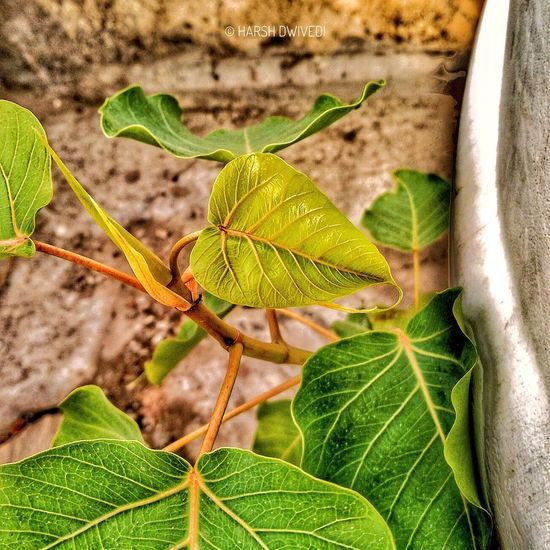Leaf Nature Close-up No People Green Color Plant Day Focus On Foreground Outdoors Growth Fragility Beauty In Nature Freshness The Great Outdoors - 2017 EyeEm Awards The Street Photographer - 2017 EyeEm Awards Live For The Story EyeEmNewHere Nature Like4like Plant Tree Naturelovers Nature Photography Hdr_Collection Hdrphotography
