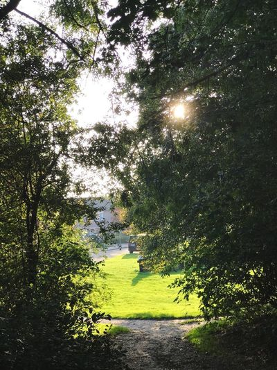 Nature 🌳 Tree Nature The Way Forward Tranquility Beauty In Nature Growth Plant Sunlight No People Day Grass Walkway Outdoors