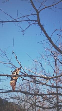 風景 静寂 Hello World Enjoying Life Winter
