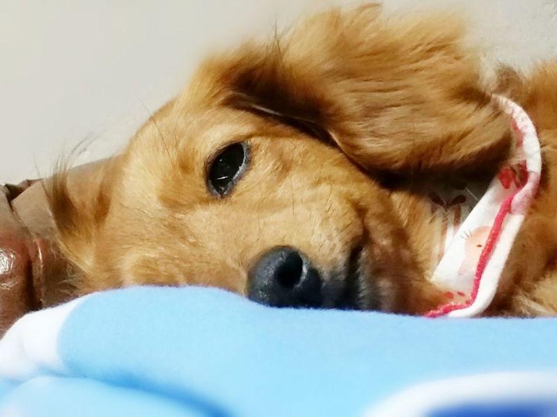 視線が…❤ Dog Love Mydog♡ ダックス ℃-ute