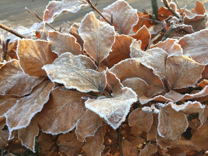 Autumn Change Close-up Day Large Group Of Objects Leaf Leaves Nature No People Outdoors
