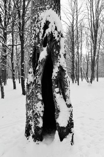 Holy tree Tree