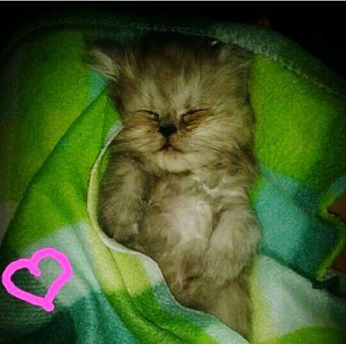 MyLittleCat 💕 🐱 Love♥