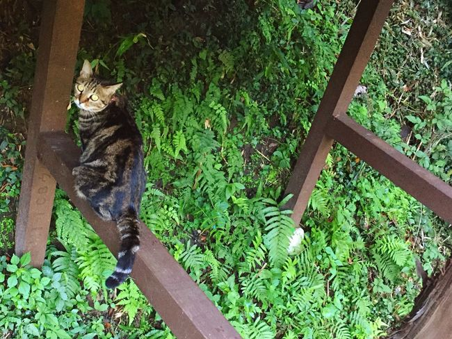 Mylove Green Color Cat Photography