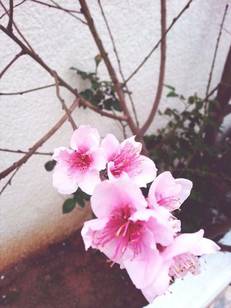 Happ Spring Spring Flowers Pink