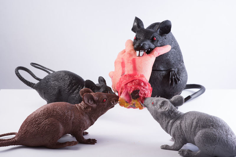 Eating Halloween Animal Themes Backgrounds Bird Border Candy Corn Close-up Day Domestic Animals Domestic Cat Fake Fighting Indoors  Mammal Nature No People Pets Plastic Rats Scene Studio Shot Togetherness White White Background
