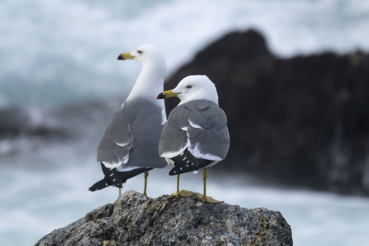 View of Janghohang, Samcheok, Gangwondo, South Korea Animal Themes Animal Wildlife Animals In The Wild Beauty In Nature Bird Day Focus On Foreground Janghohang Nature No People Outdoors Perching Sea Seagull Seaside