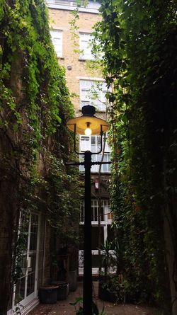 London Tree Built Structure Architecture Building Exterior No People Outdoors Day Growth Nature Lamp
