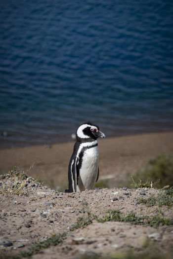 View of penguin on rock at lakeshore