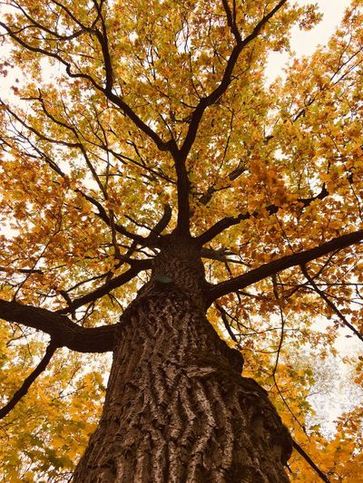 Autumn🍁🍁🍁 Plant Branch Growth Low Angle View Sky Autumn No People Tree Trunk Full Frame Beauty In Nature First Eyeem Photo EyeEmNewHere