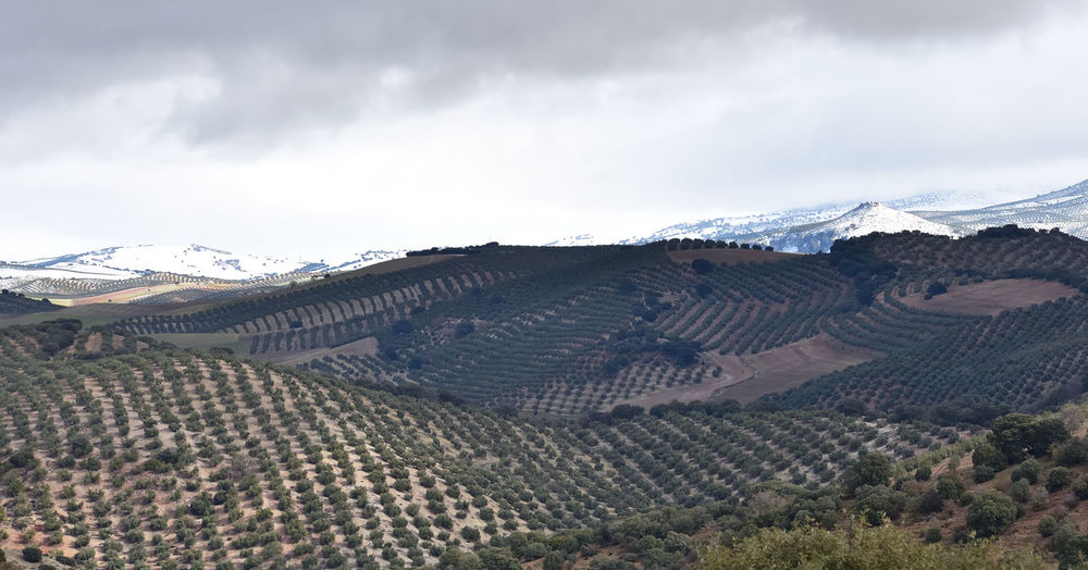 Scenic view of snowcapped mountains and agricultural fields against cloudy sky
