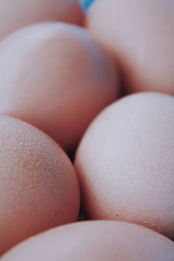Food And Drink Easter Egg Yolk Egg Human Hand Close-up Prepared Food Boiled Egg Boiled Protein