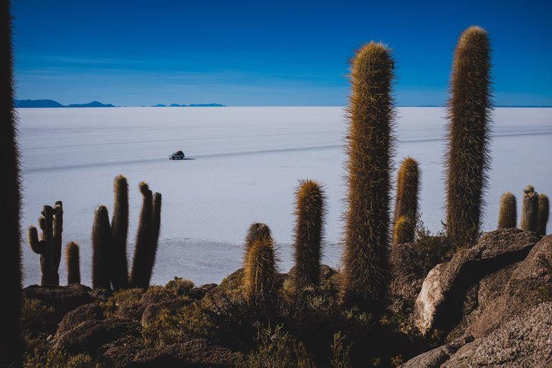 Isla Incahuasi - Salar De Uyuni Bolivia