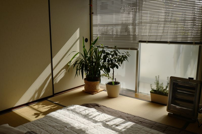 Plant Potted Plant Growth Nature No People Indoors  Sunlight