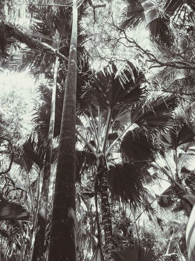 Palm Tree Tree Outdoors Beauty In Nature Traveling Photography Blackandwhite Jungle Coco De Mer