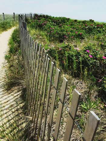 Grass Outdoors Railing Day Protection Plant No People Nature Growth Beauty In Nature Sky Beachphotography Sand Duxbury Beach Beach Grass Beach Rose The Great Outdoors - 2017 EyeEm Awards