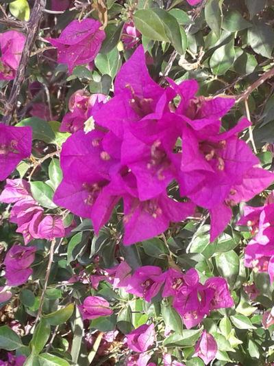Pink, petals,