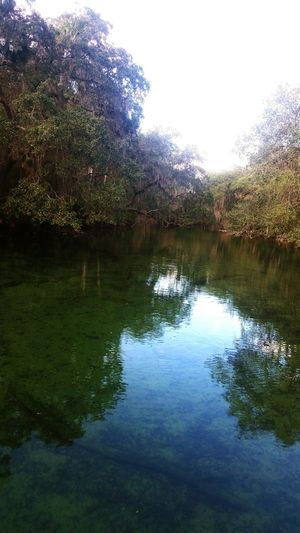 Nature Florida The Real Florida No People Florida Springs Beauty In Nature Tree Water