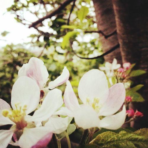 Flower Flower Collection Spring Flowers Pink Flower Mygarden Flower Power SNSD ♡ MyPhotography Myphotowork