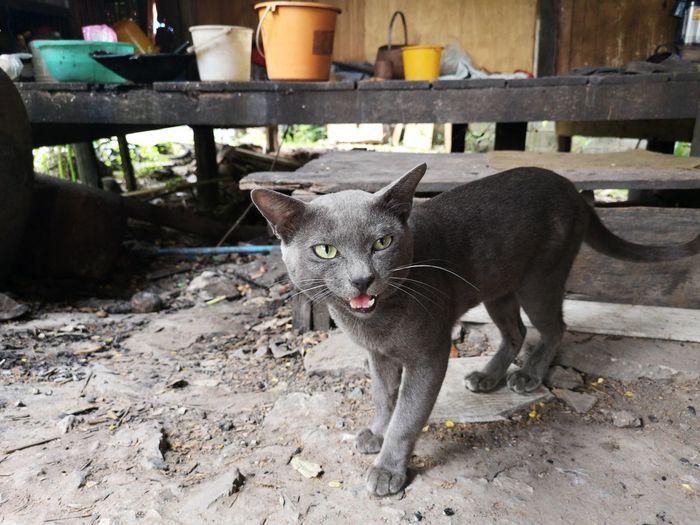 Pet Thai Animal Thailand Backgrounds Dark Grey Cat Animal Themes Cat Domestic Cat The Street Photographer - 2018 EyeEm Awards EyeEmNewHere