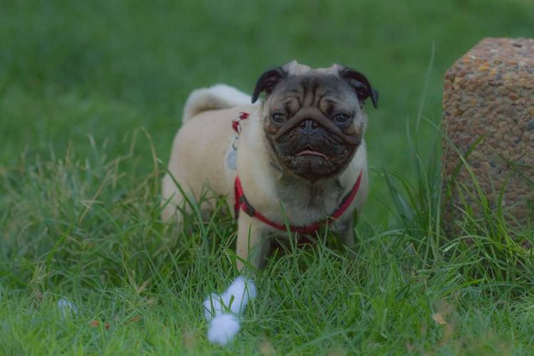 Puppy❤ Relaxing Enjoying Life Dogofeyeem Dog❤ Dog Of The Day Green Color Green Grass 🌱 Nice Day 🙌😄 Dogs Of EyeEm