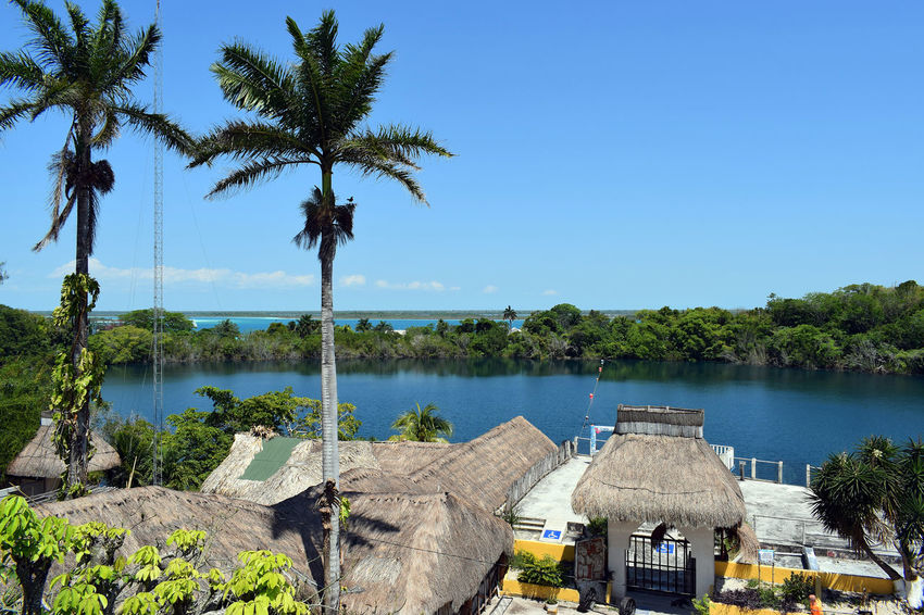 Bacalar Bacalar Lagoon Mexico Architecture Beauty In Nature Cenote Azul Growth Nature No People Outdoors Palm Tree Tree Water