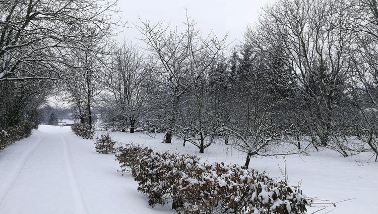 Bird Snow Cold Temperature Winter Flock Of Birds Snowing Animal Themes