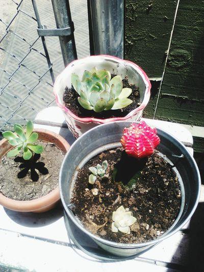 Gardening Flowers,Plants & Garden Cactus Nature Summertime