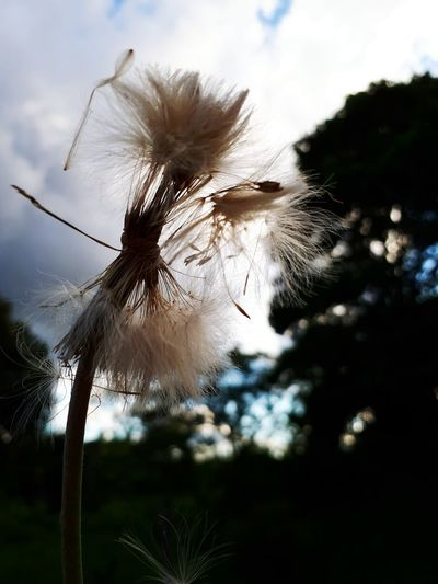 Fragility Flower Beauty In Nature Outdoors Sky Day