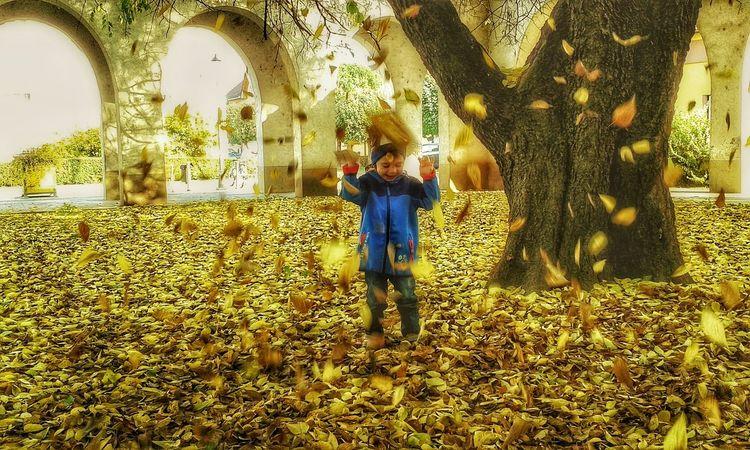 Autum Autumn Autumn Colors Autumn Leaves Child Childhood Fall Fall Beauty Fall Colors Leaf Leaves Nature Outdoors Season  Seasons