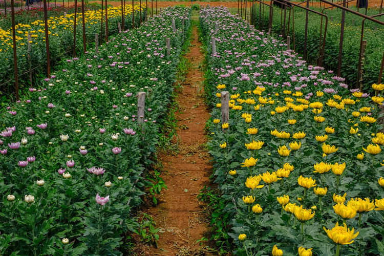 View of flowering plants in field