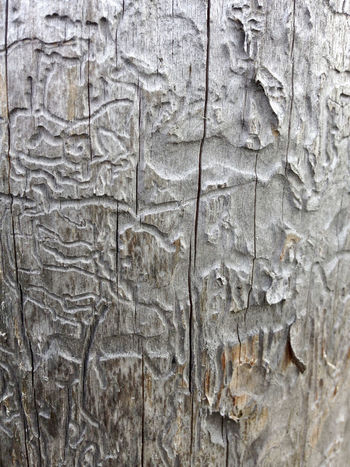 Tree Architecture Backgrounds Built Structure Close-up Craft Day Full Frame Gray Natural Pattern Nature No People Outdoors Pattern Plant Bark Rough Solid Textured  Tree Trunk Wall - Building Feature Wood - Material