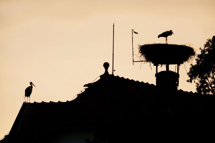 Silhouette birds perching on roof against sky