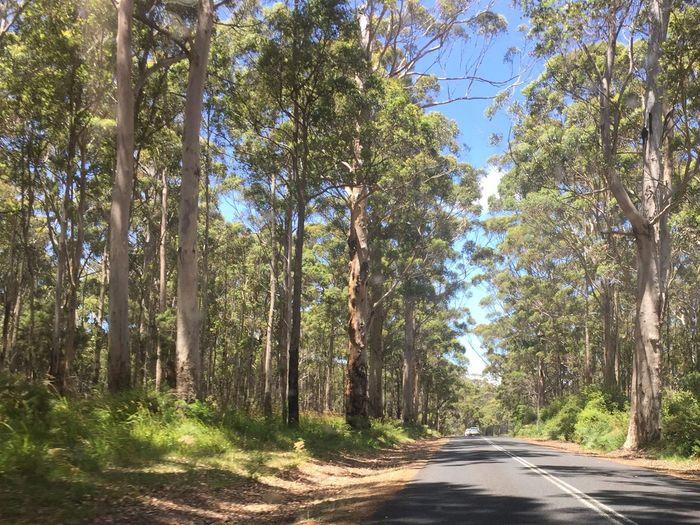 Denmark Australia Forest