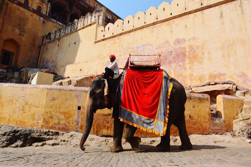 Rajastan Jaipur India Elephant Architecture Built Structure Building Exterior Sunlight Building One Person Clothing Real People The Traveler - 2018 EyeEm Awards