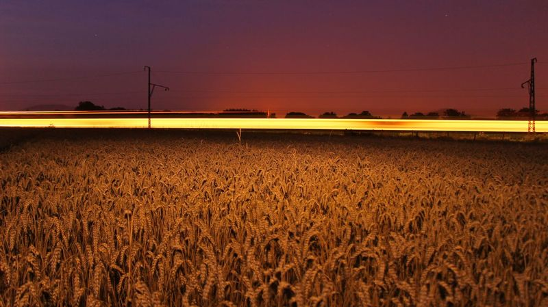 Train Lights Cereal Plant Clear Sky Field Gold Colored Nature Night No People Outdoors