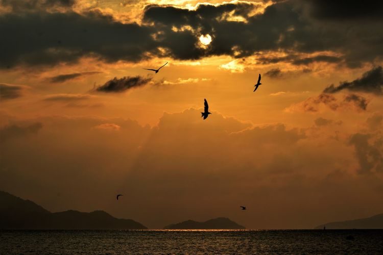 Sky Sunset Cloud - Sky Beauty In Nature Water Silhouette Orange Color Scenics - Nature Flying Sea Bird Vertebrate Nature Animal Themes Animal Animals In The Wild No People Beauty In Nature Photography Capture The Moment Capture Tomorrow EyeEmNewHere My Best Photo