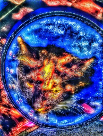Kali and a bad day Special Effects Life Is A Journey Enjoying Life Cat Photography Cat Lovers Phone Photography Every Day Is A New Day Down Abdout Depressed Cat