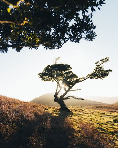 Tree Plant Nature No People Sky Tranquility Beauty In Nature Outdoors Growth Land Landscape Day Tranquil Scene Clear Sky Scenics - Nature Sunlight Branch Field Environment Non-urban Scene