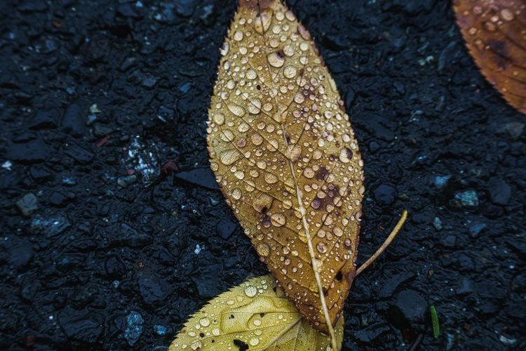 High angle view of wet leaves on field during rainy season
