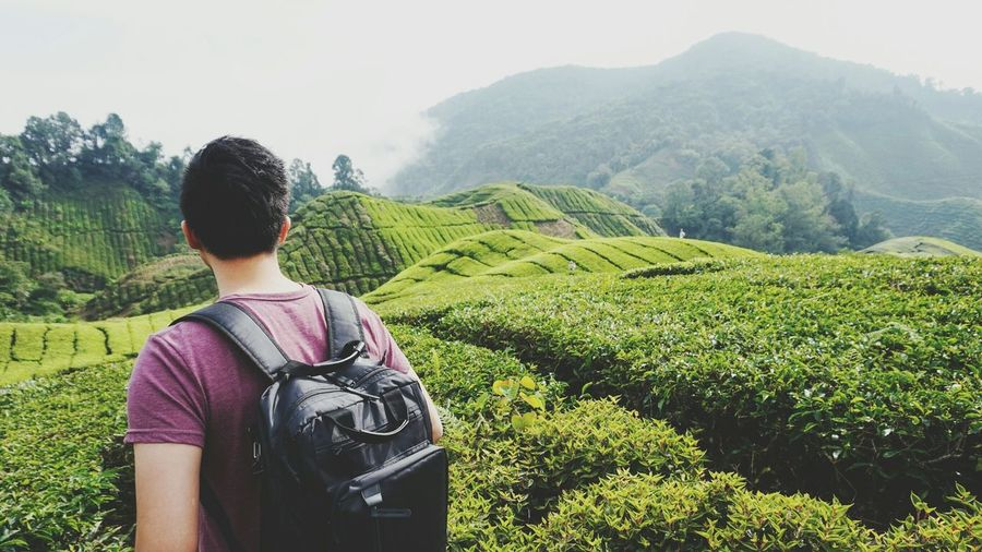 The Great Outdoors - 2016 EyeEm Awards Tea Plantation  and The Boyfriend at Cameron Highlands
