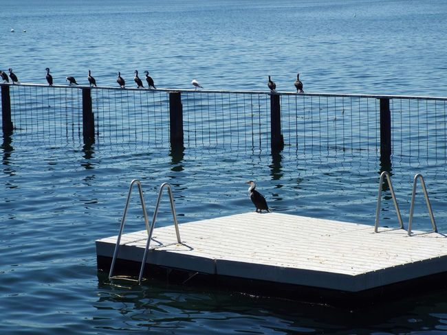 Cool pool Enjoying The Sights On A Stroll Relaxing Nature Country Life Australia Autumn Coldwater Sea Water