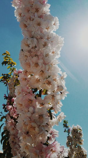 Low angle view of flowers against the sky
