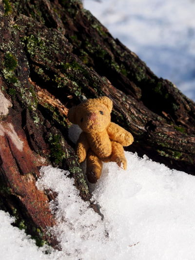 Nature Snow No People Cold Temperature Winter Day Close-up Toy Tree Water Beauty In Nature Sea Focus On Foreground Plant Rock Stuffed Toy Sky Rock - Object Teddy Bear Outdoors