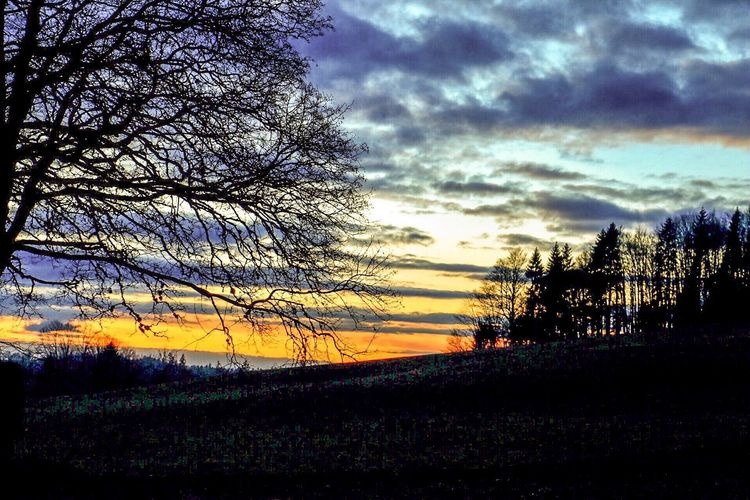 Tree Sky Beauty In Nature Sunset Tranquil Scene Outdoors