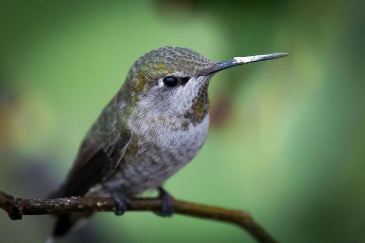 Close-up of hummingbird perching on plant