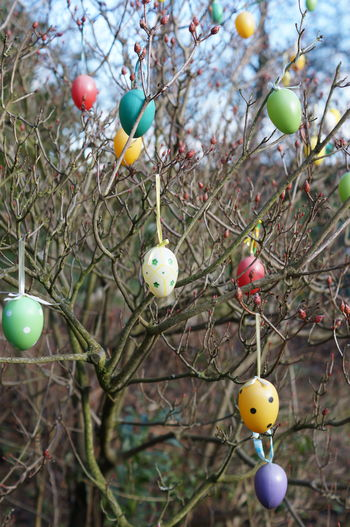 Easter eggs hanging on bare tree