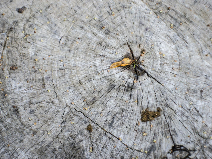 Slice of wood Backgrounds Close-up Concentric Cracked Cross Section Full Frame No People Pattern Textured  Tree Tree Ring Tree Stump Wood - Material